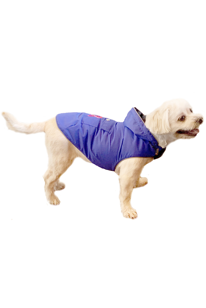 Blue Mandi and Marley Moments Lightweight Waterproof Dog Raincoat